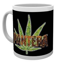 Cana Multicolora Pantera