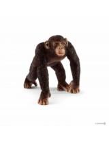 Cimpanezeu Mascul - Sl14817